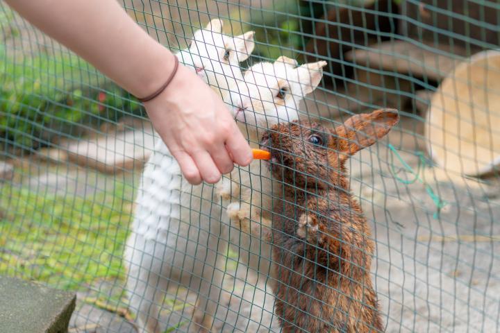 人懐っこいウサギが可愛いです